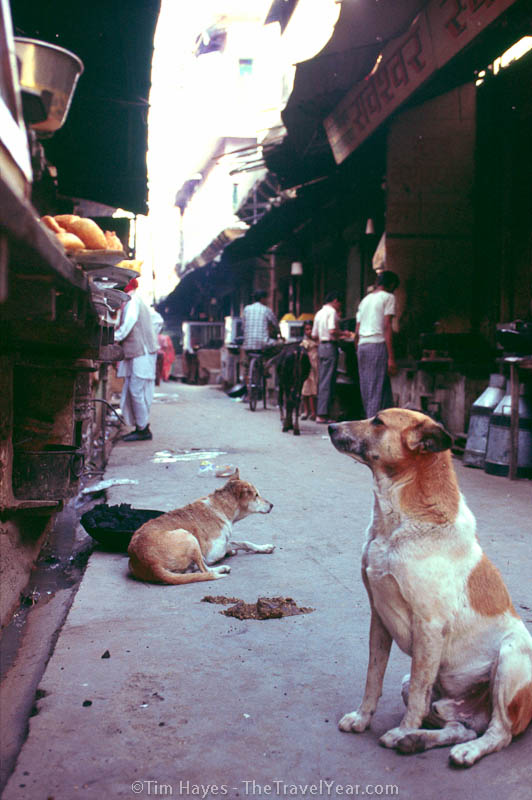 A dog waits patiently for scraps from a food vendor in Pushkar.
