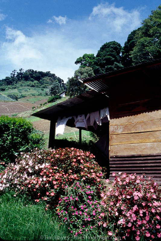 Flowers surround a home in the highlands of central Panama.